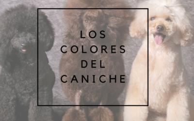 Los colores del caniche