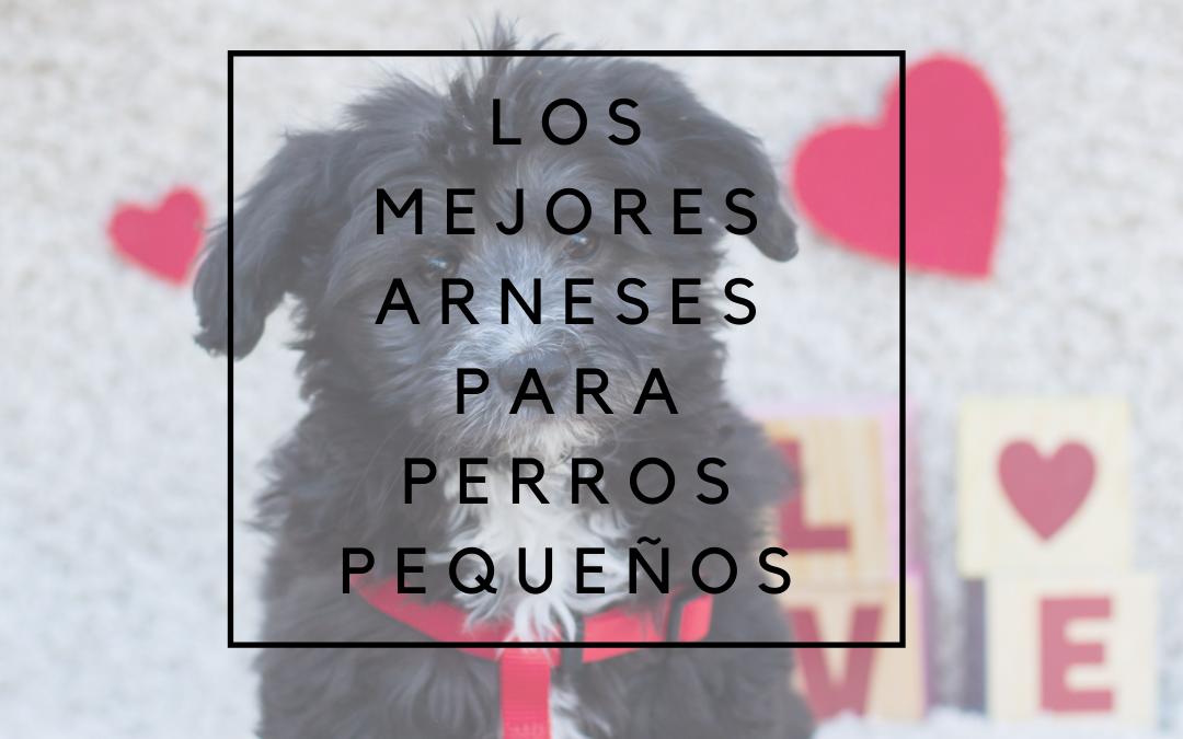 🏅▶️Los mejores arneses para perros pequeños [2020]◀️
