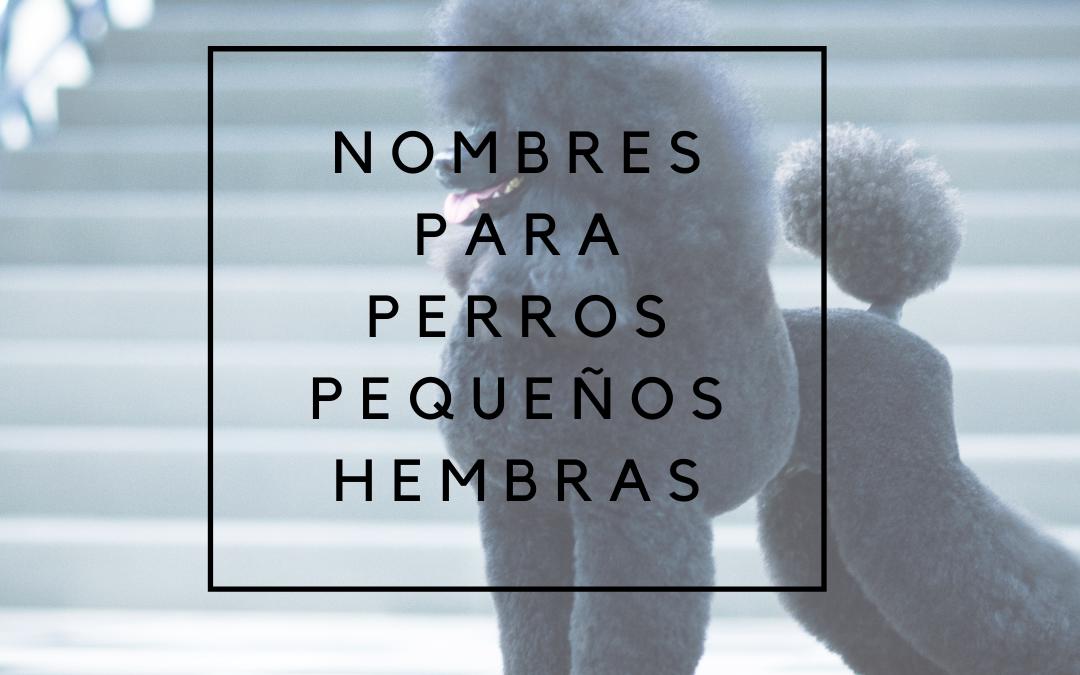 Nombres para perros pequeños hembras