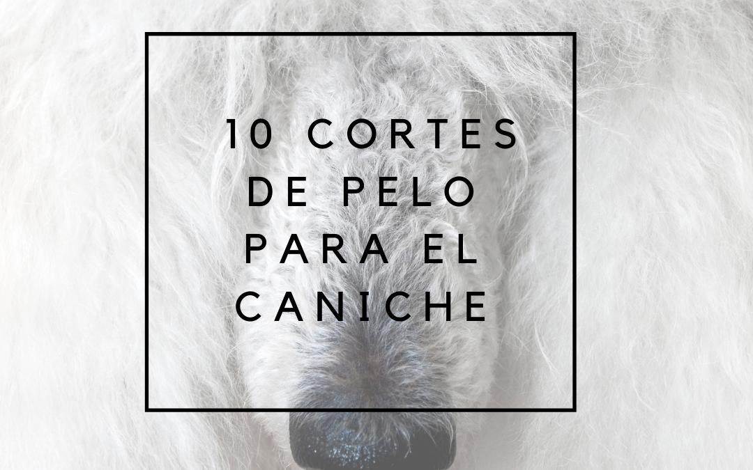 10 Cortes de pelo para el caniche o poodle