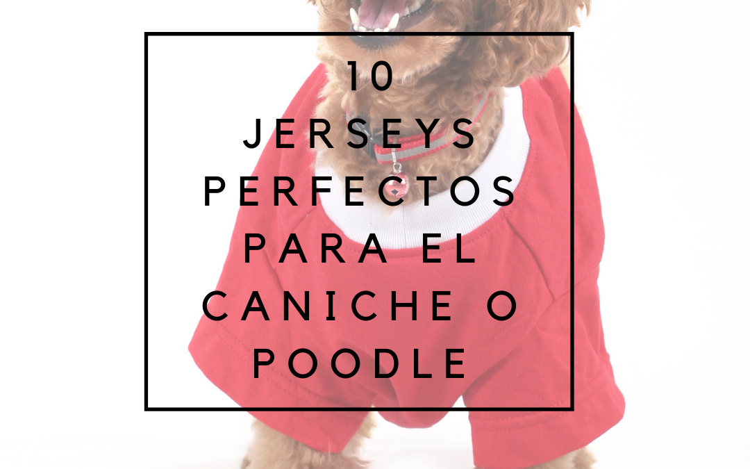10 Jerseys perfectos para caniches