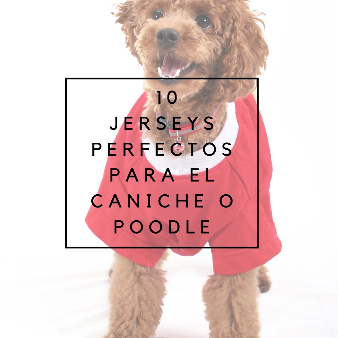 10 jerseys perfectos para caniches
