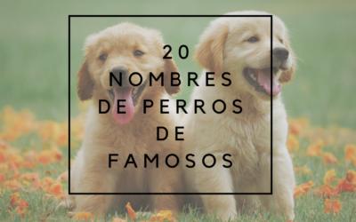 20 Nombres de perros de famosos