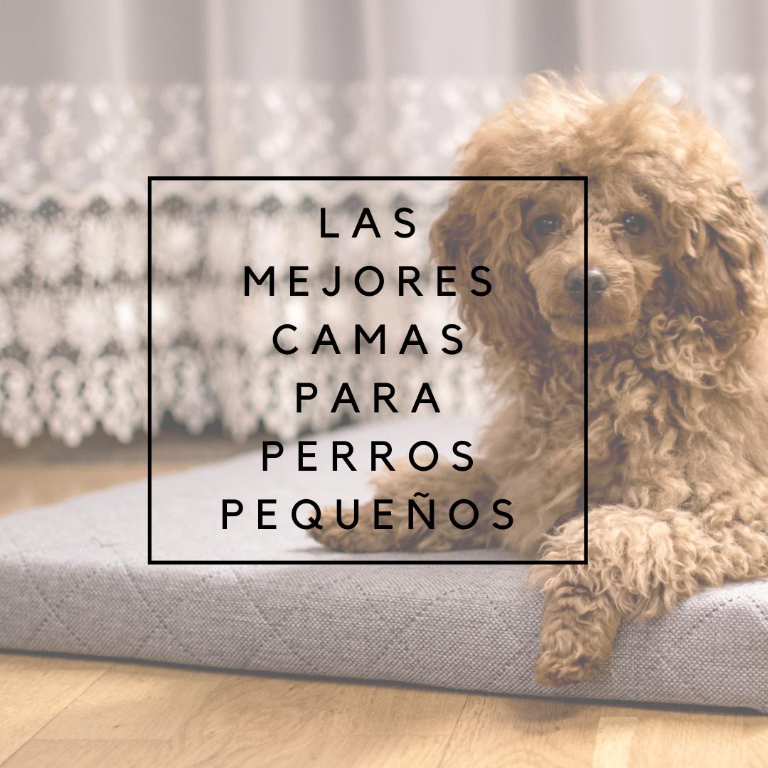 las mejores camas para perros pequeños