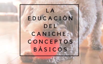 La educación del caniche