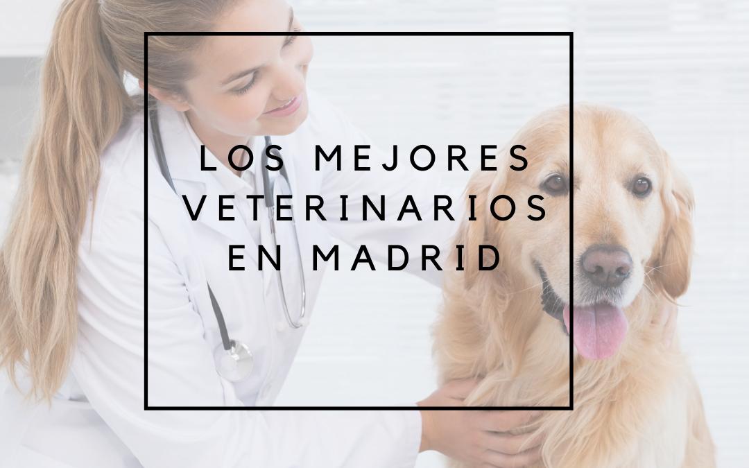 Los mejores veterinarios en Madrid