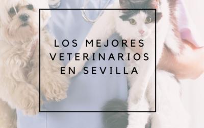 Veterinarios en Sevilla